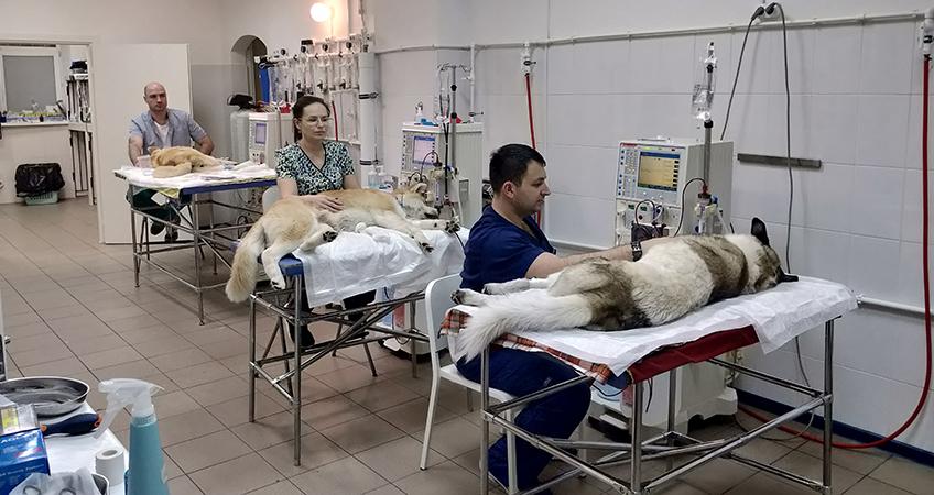 Гемодиализ для собак и кошек в Московском отделении ...